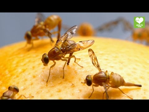 Home Remedies To Get Rid Of Flies | Health Tips