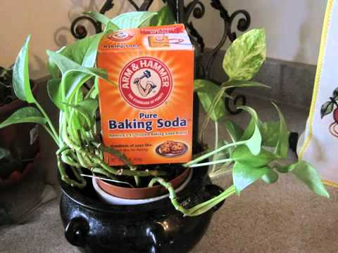 baking soda and molasses cancer protocol   YouTube