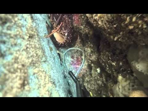 How to catch a Crayfish