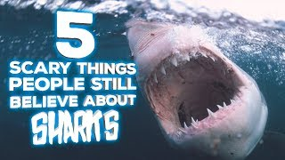 5 Scary Things People Believe About Sharks