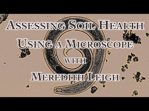 Assessing Soil Health Using a Microscope with Meredith Leigh