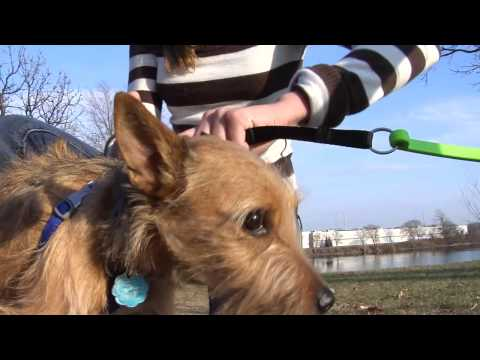 Woof Cycle Bike Trotter - A Bike Attachment To Exercise Your Dog!