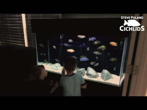 How to Make Your Aquarium Safe for Your Children