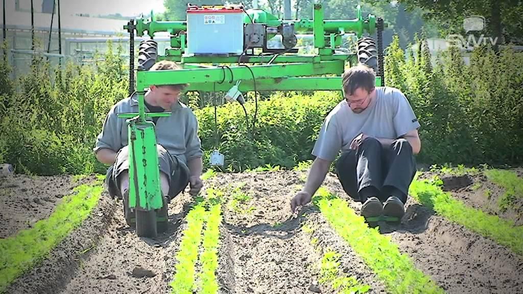 biogroenten - Waregem - West-Vlaanderen
