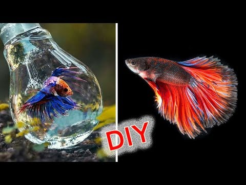 How to Build a mini aquarium use waste electric bulb   Home Decorative   Amazing crafts idea   DIY