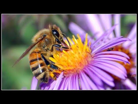 Beekeepers are HEROES~
