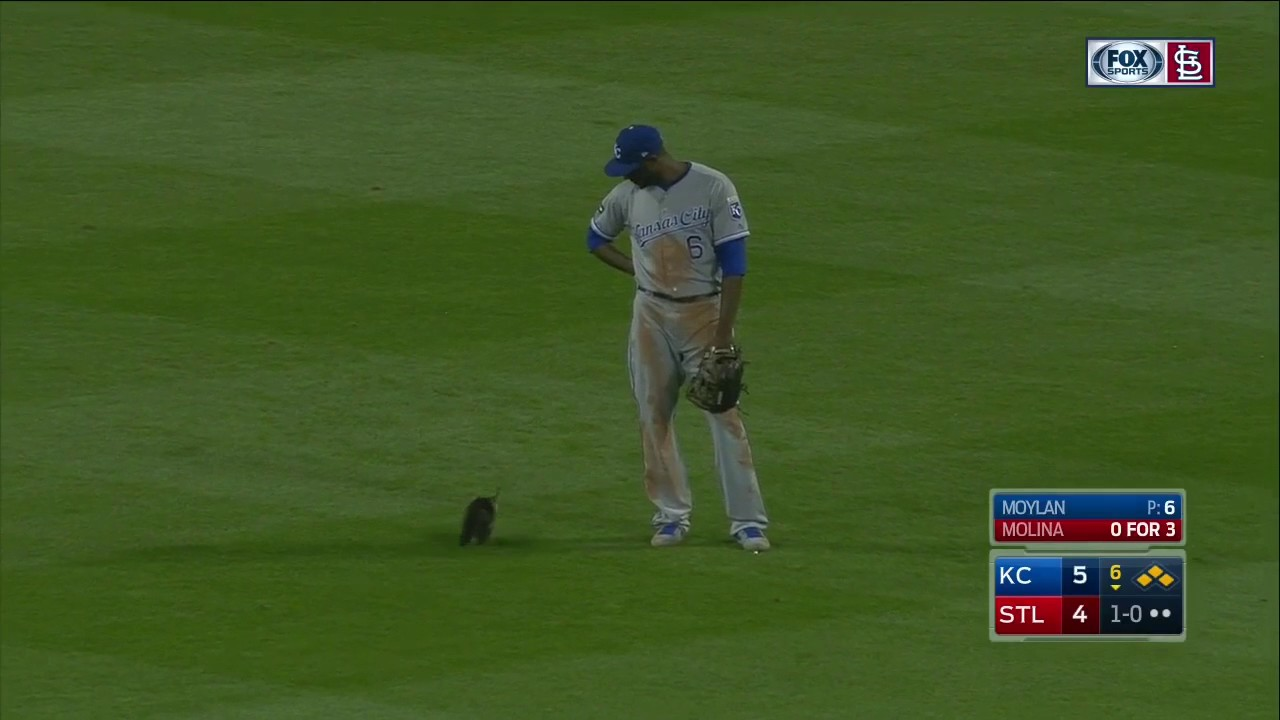Rally Cat invades the field during Royals-Cardinals