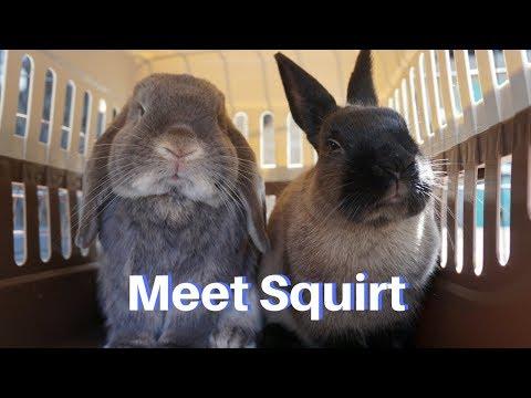 Meet squirt    new bunny?!?!