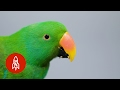 This Beautiful Parrot May Be the World's Smartest Bird