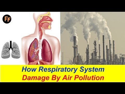 How Respiratory System Damage? Air Pollution Effects on Our Health - Asthma Causes by Air Pollution?