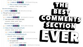 The Best Comments Section Ever