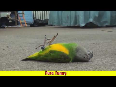 animals pretending to be dead from getting shot