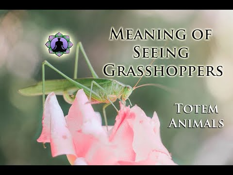 The Meaning of Seeing Grasshoppers: Totem Animals and Signs☯