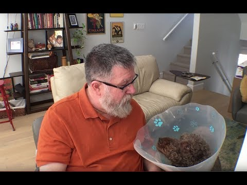 The Cone of Shame - Steve's Vlog #13