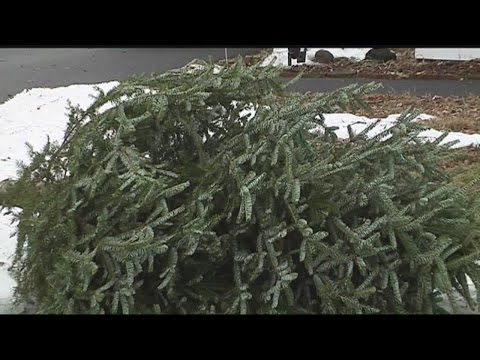Why you should get rid of your Christmas tree now