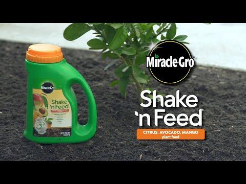 How to Use Miracle-Gro® Shake 'n Feed® Citrus, Avocado, Mango Plant Food