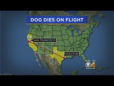 Family's Dog Dies In Cargo Hold On United Flight