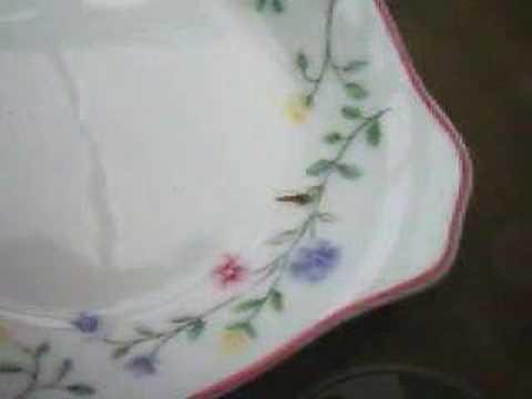 Silverfish In A Dish