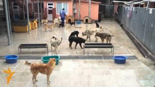 ძაღლები პატრონების მოლოდინში