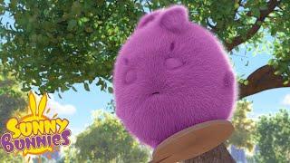 SUNNY BUNNIES - Stay Awake Big Boo   Season 3   Cartoons for Children