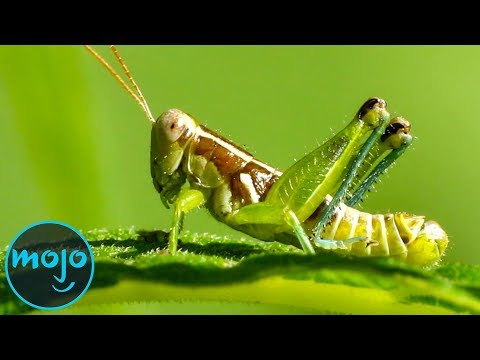 Top 10 Bugs Humans Can Eat