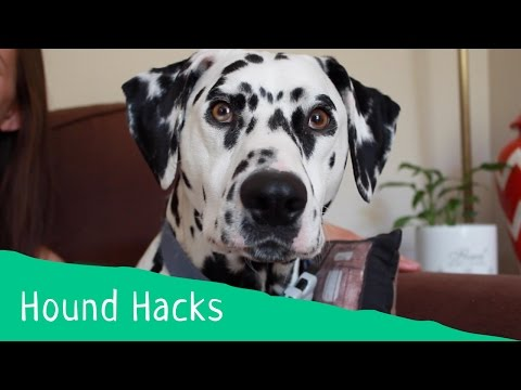 Hound Hacks: Tip 9 - How to Remove Dog Hair from Furniture