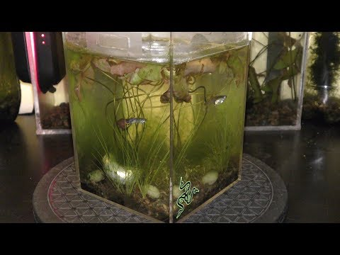 Natural Aquarium Fish Care