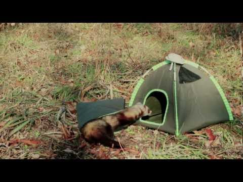 Marshall Pet Products - Ferret Camping Set