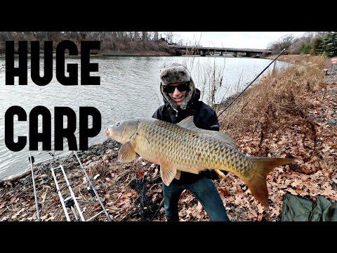 How to Catch Giant Carp!!