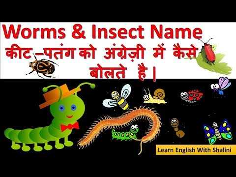 How to improve english vocabulary -( Worms & Insects Names )