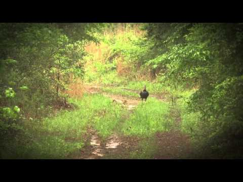 Mississippi Gobbler - Swing and Miss - #MakeEmFlop