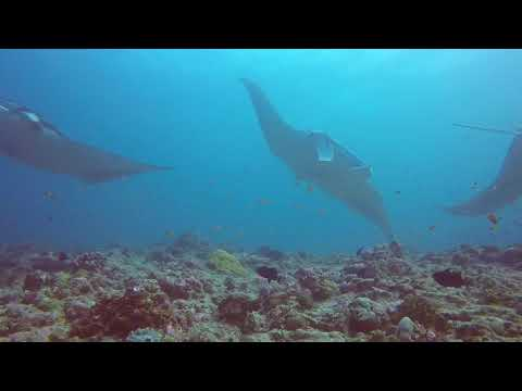 Northern Atolls & Huvadhoo - Maldives liveaboard dive holiday aftermovie @ Sea Spirit, Blue o two -