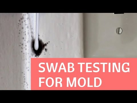 DIY Mold Test:  How To Test Mold In Your Home