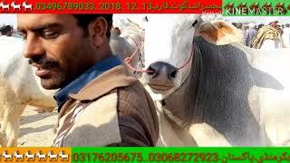 bakra mandi dera ghazi khan | balawal goat faram