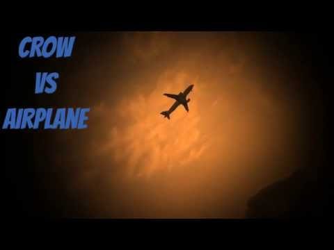 Airplane flight or a bird like a crow which is the coolest and which can fly better (in the air)