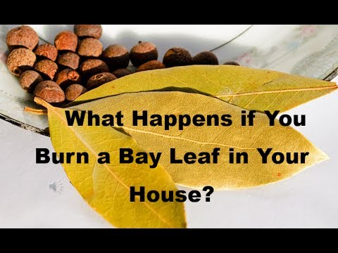 What Happens if You Burn a Bay Leaf in Your House?