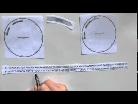 How to design primers for Gibson assembly