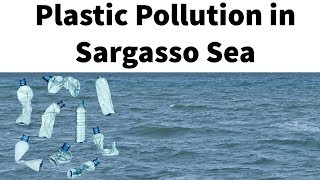 Plastic pollution in Sargasso sea - Floating seaweed ruins Caribbean islands- Current Affairs 2018