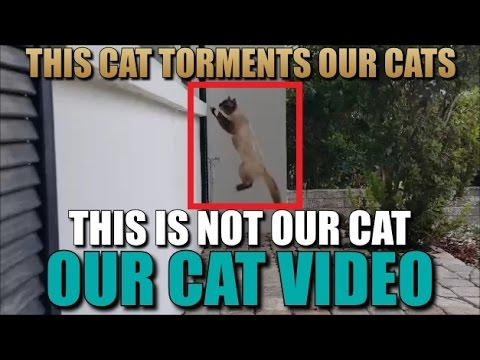 Our Cat Video See This Outdoor Cat Torment Our Indoor Cats
