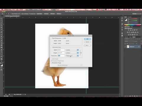 Photoshop CS6 Image Resize Resolution and Guides