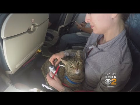 Are People Abusing System To Get Free Flights For Pets?