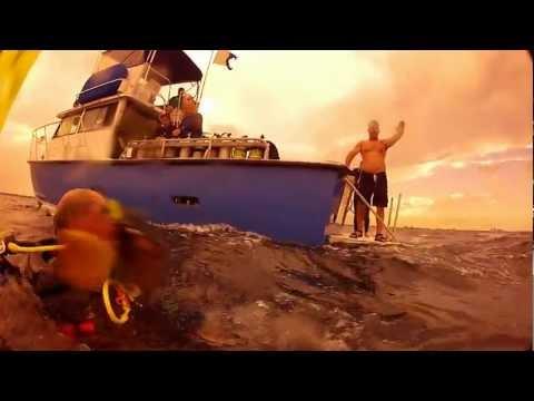 Palm Beach Sea Turtle Observation Dive 1