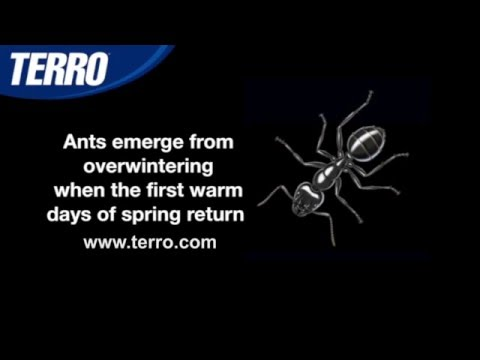 Where Do Ants Go in the Winter?