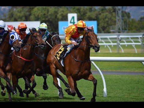 Irish Horse Racing Tips