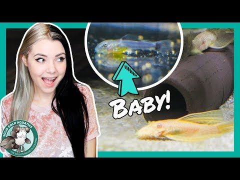 MY FISH LAID EGGS!