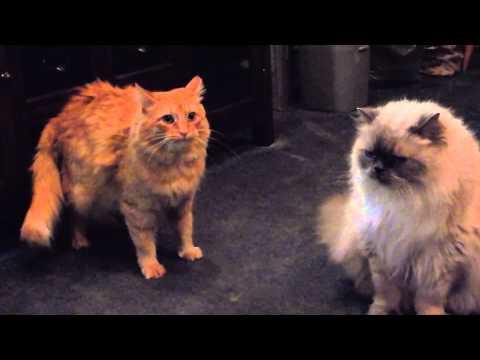 Kitten eases tension between adult cats