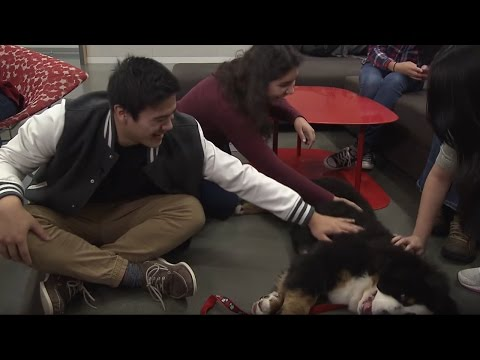 Therapy Dogs for Stress Relief