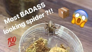 Download Unboxing my FIRST ever TRAPDOOR SPIDER !!! FINALLY got one !!! Video