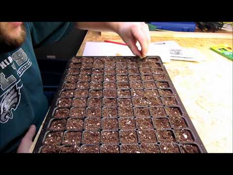 Planting Pepper and Eggplant Seeds
