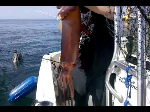 Giant Squid fishing 30 Pounds Oil Rigs